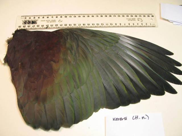 aboutKereru02