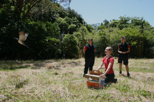 The Nest Kereru release