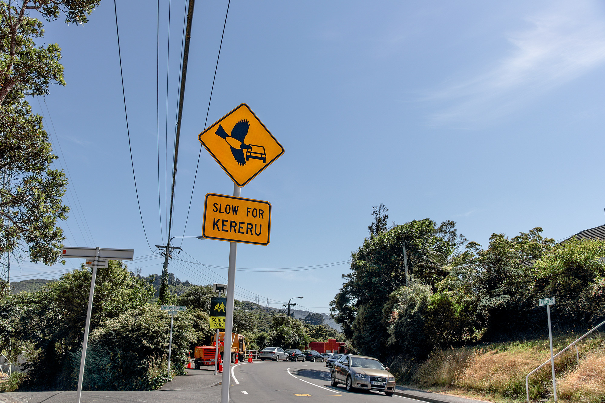 World's first official kererū road safety signs installed