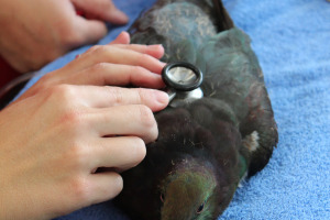 Kereru Endoscopy